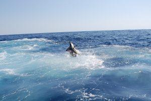 sportfishing in Mazatlán and Cancún - Riviera Maya