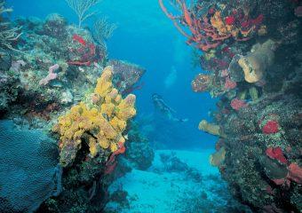 arrecife mesoamericano2