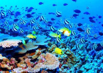 arrecife5